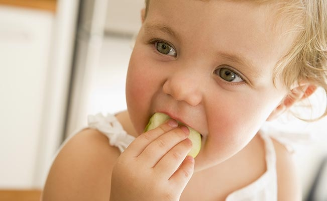Your Toddler's Nutrition